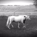 relationsbaserad hästkommunikation