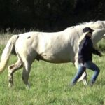 Relationship based horse connection
