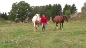 How to catch your horse in the pasture free